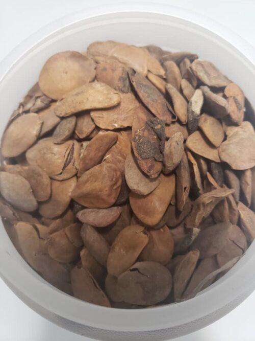 Abere Seeds (Hunteria Umbellata) Box Size 2500ML 5
